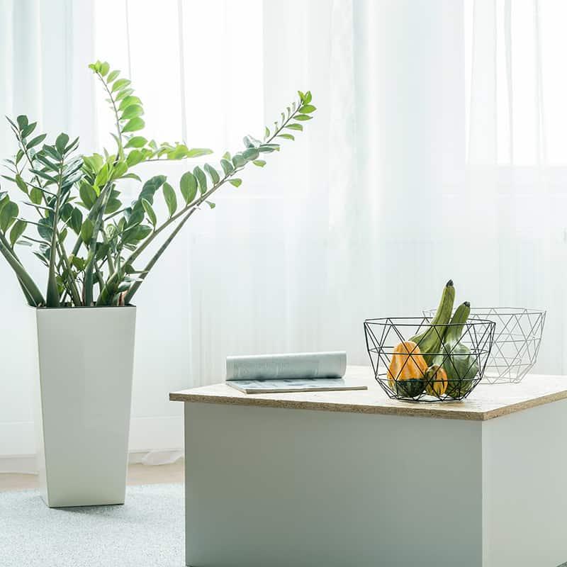 Raum trennen mit Pflanzen - kreativLISTE