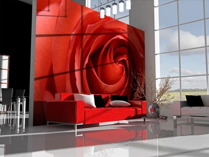 Awakening Rose Fototapete