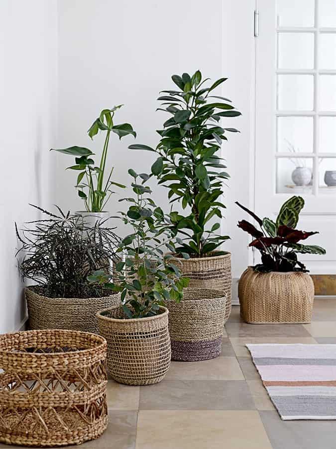 Körbe für Pflanzen