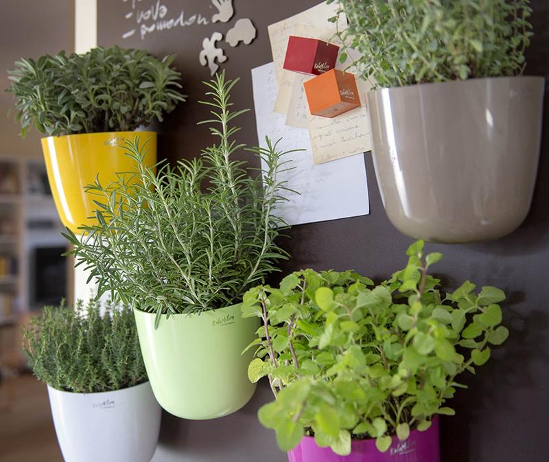 Magnetische Pflanztöpfe für die Küche