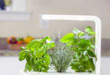 Click & Grow Smarter Kräutergarten für Innenräume