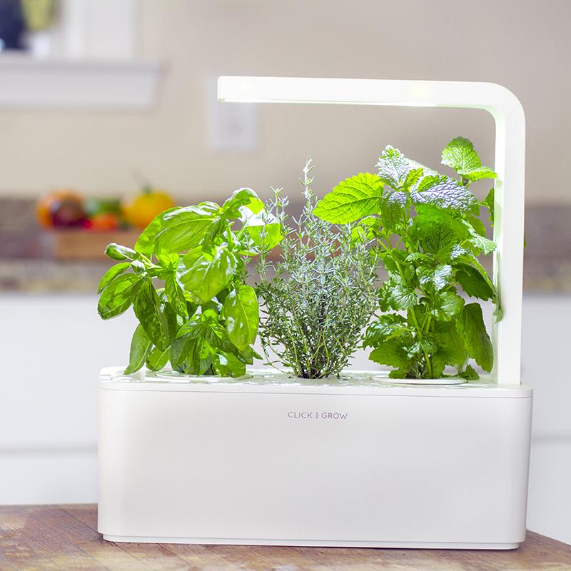 So können Kräuter in der Küche das ganze Jahr wachsen ...