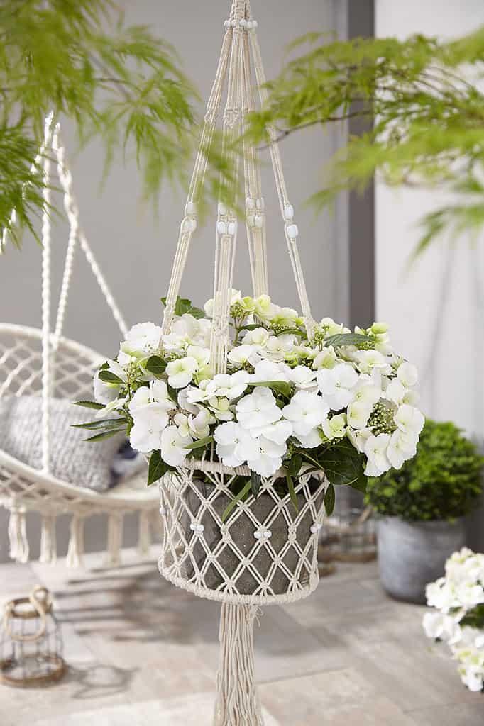 Runaway Bride® als Blumenampel